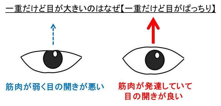 痩せる と 目 が 大きく なる